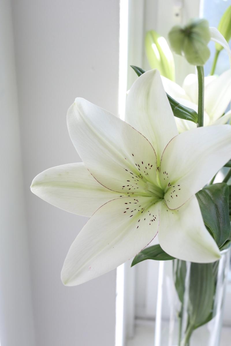 Homevialaura, valkoiset liljat