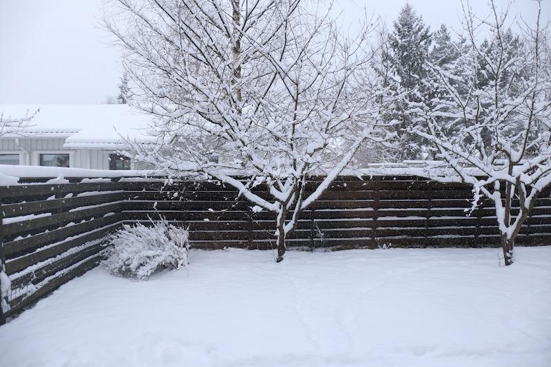 Homevialaura, luminen piha