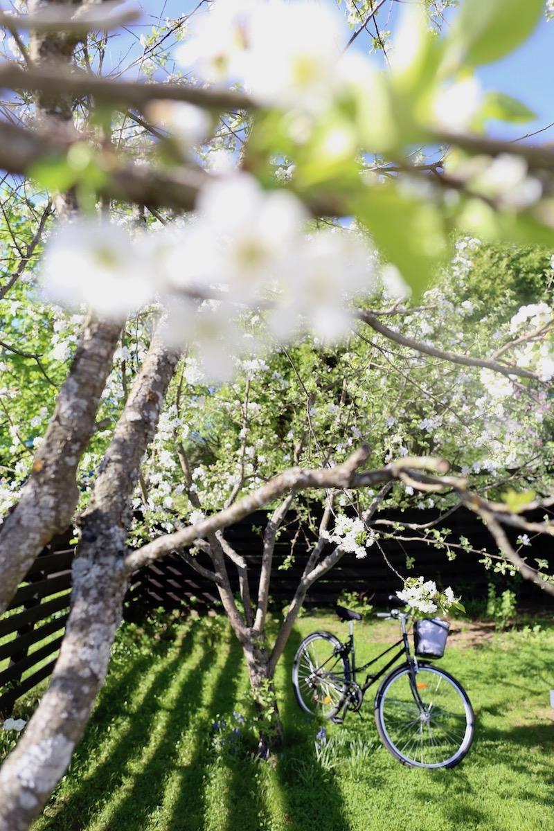 Homevialaura, piha, puutarha
