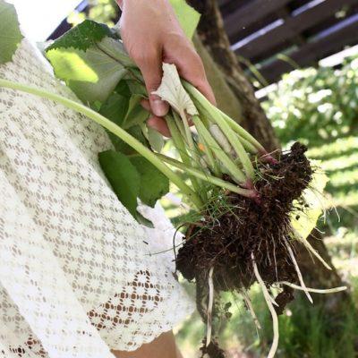 Pihatöitä vai sittenkin puutarhaterapiaa?