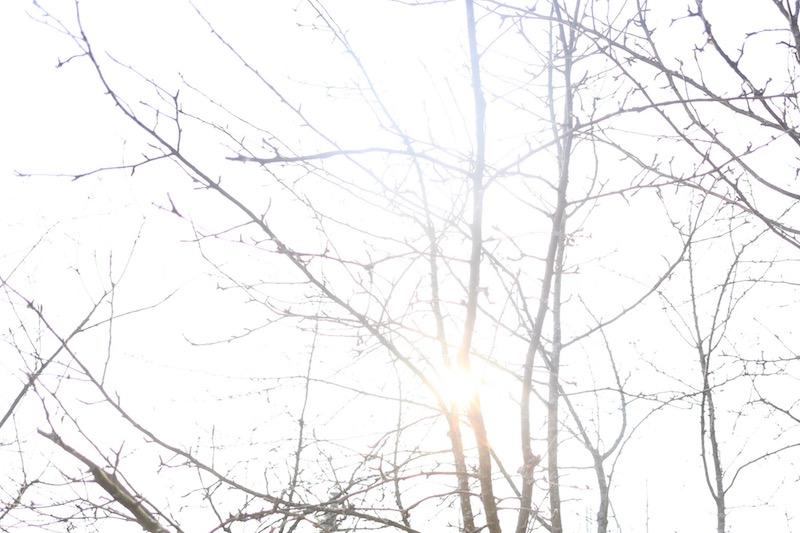 Homevialaura, pihan keväthuolto