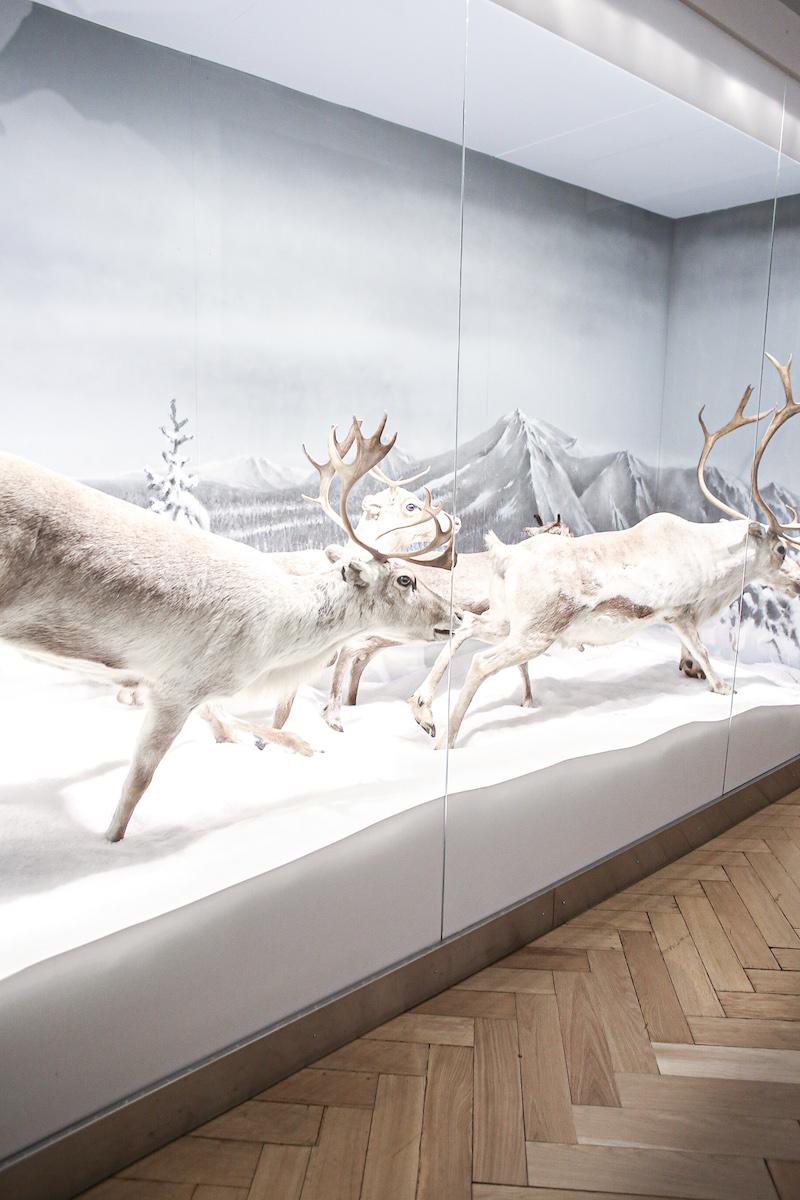 Homevialaura, Luonnontieteellinen museo, Luomus, Helsinki, Museokortti