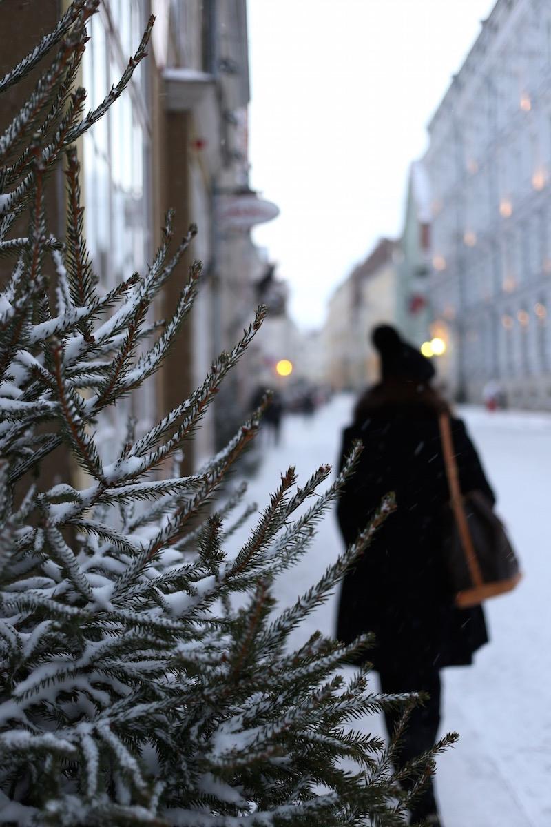 Homevialaura, Tallinna, vanha kaupunki