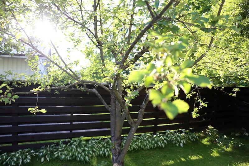 Homevialaura, Fiskars, piha, puutarha, syystalkoot