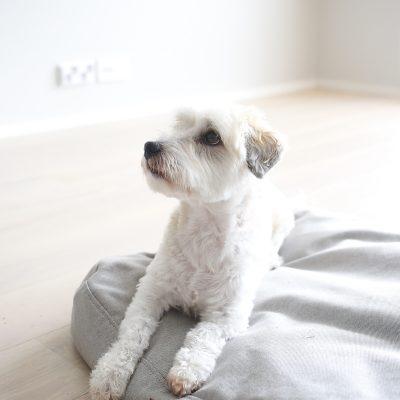 Uusi koiran peti asunnolle